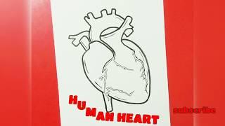 How To Draw 3d Human Heart 免费在线视频最佳电影电视节目 Viveos Net