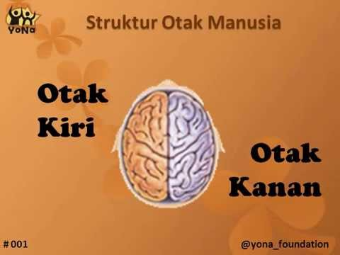 Video Otak Kanan Vs Otak Kiri