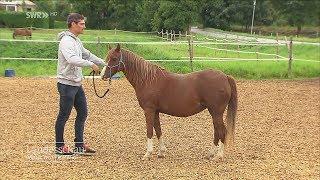Souveräner Auftreten Dank Pferden