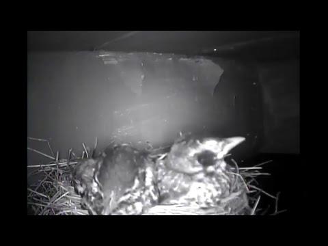 Facethewind Live Bird-Cam