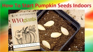 Tips And Tricks On How To Start Pumpkin Seeds Indoors