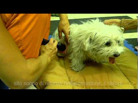 Fisioterapia per spalla dopo il video infortunio