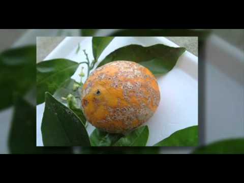 Kunin parasitiko organismo katutubong remedyong