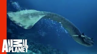 Mermaids Attacked By Giant Shark | Mermaids