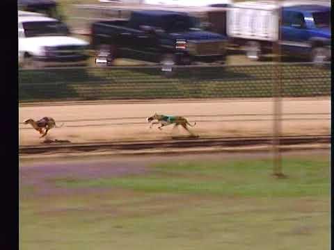 Race 42