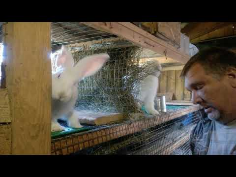 Кормление кроликов и чуть чуть обо всём.
