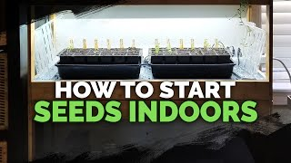 Seed Starting Indoors Under Grow Lights 101