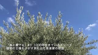 """ラジオドラマ""""森と奏でる""""#3"""