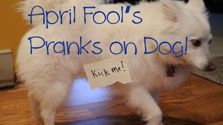 Pulling pranks on my dog for April Fool's day!