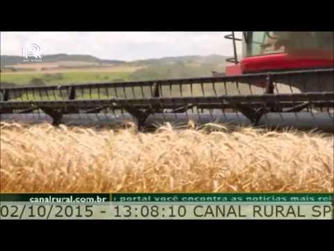 Entrevista Canal Rural Biotrigo 2015