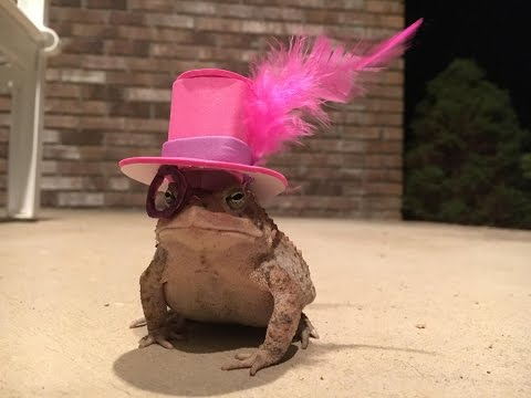 An Alabama Man Makes Incredible Hats For His Little Toad | Southern Living