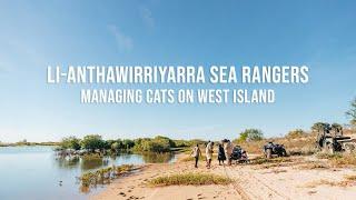 li-Anthawirriyarra Sea Rangers managing cats on West Island