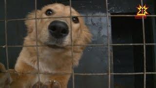 Фонд помощи  животным «Умка» на грани банкротства