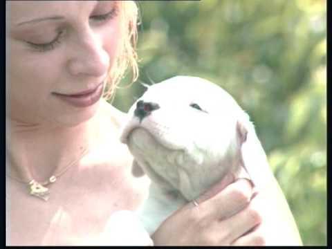The Argentine Mastiff - Pet Dog Documentary English