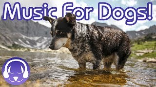 Music for Dogs: Calm Your Dog with this Relaxing Playlist!