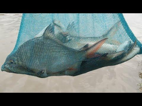 Download Mancing Ikan Tawes Bader Umpan Daun Sawi Di Sungai