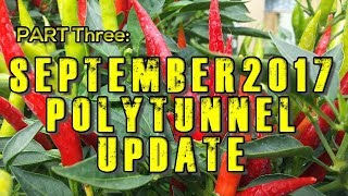Chilli Polytunnel Vlog Update September 2017 'TOTAL DEVASTATION'
