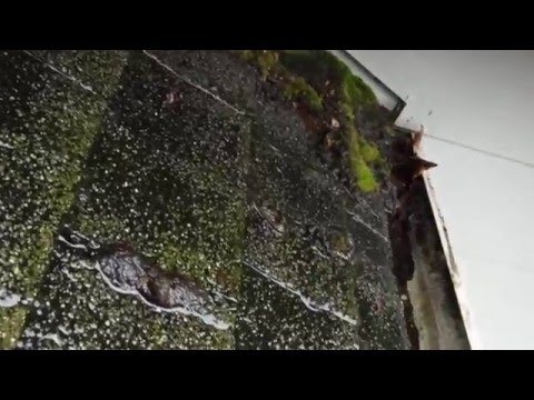 @ Leafless in Seattle we look for and identify things like this so we can redesign the flow of rain water to reduce or eliminate this roof damage caused by lazy gutters.