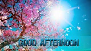 Good Afternoon WhatsApp Status, Messages, Status, Images, Wishes, Quotes, Photo #goodafternoon