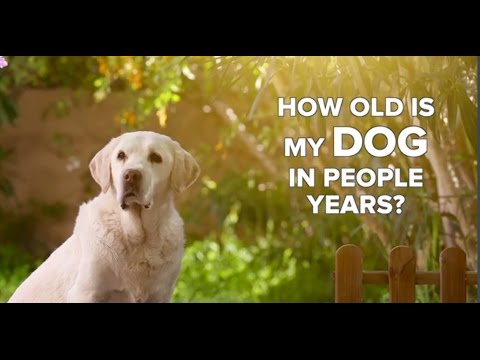How Old Is My Dog In People Years?