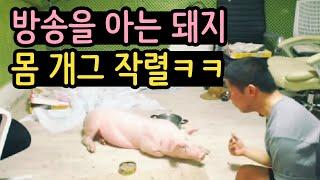 [철구] 방송을 아는 돼지 몸개그 작렬ㅋㅋㅋ :: ChulGu