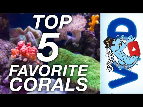 Our Top 5 Favorite Corals For Your Reef Tank (Video)