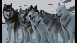 八只狗狗为等主人归来,在暴雪中独立生存了175天