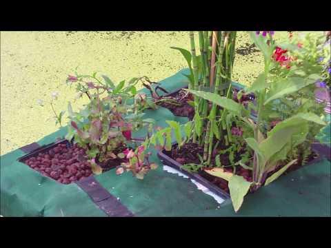 schwimmende Pflanzinsel für den Gartenteich selber bauen