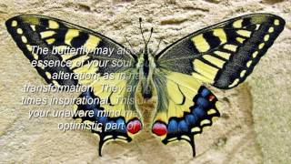 Butterfly Dreams Meaning