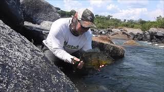 VIDEO: Río Roosevelt  - Amazonas