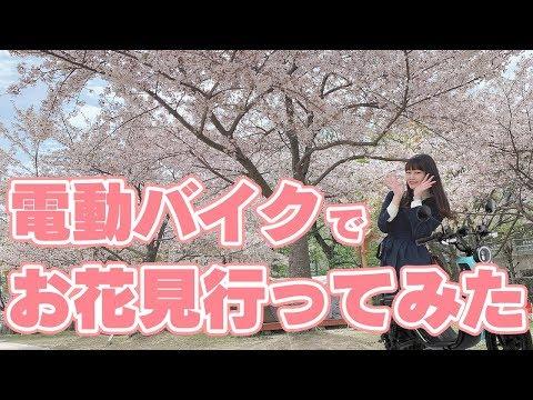 【電動バイク】新車種 niu Uに乗って桜を見に行ってきました!【走行シーン&レビュー】