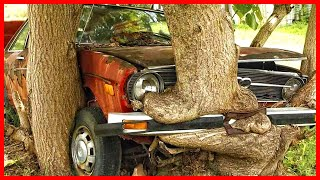 Trees devour abandoned cars