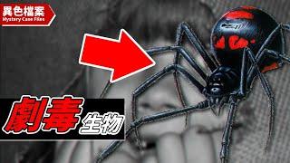 世紀最毒物種!10種劇毒生物 【異獸檔案】