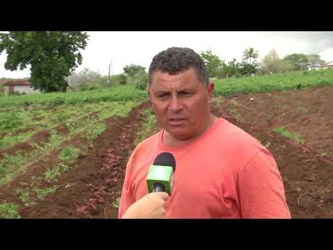 Agricultores comemoram chegada de chuvas em Boqueirão