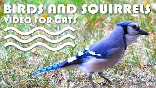 VIDEO FOR CATS TO WATCH - Birds and Squirrels!