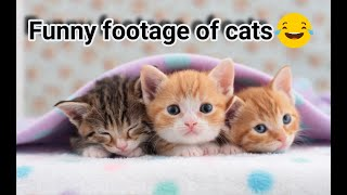 Very funny footage of cats 😂😂 لقطات جد مضحكة للقطط