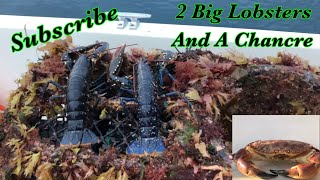 Lobster Fishing In Guernsey 🇬🇬🦞🦀