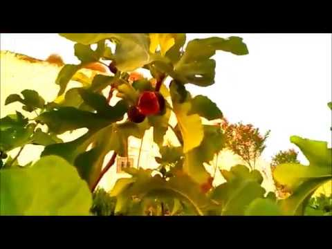 VILLANUEVA DE LAS TORRES (Granada) , es un video creado por Manuel Carmona.