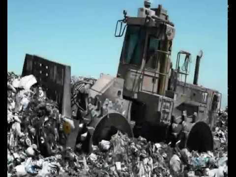Последствия загрязнения окружающей среды (Платонова Анастасия)