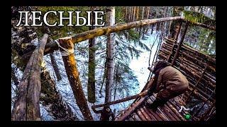 ДОМ НА ДЕРЕВЕ СВОИМИ РУКАМИ   ОХОТНИЧЬЯ БАШНЯ   HUNTING TOWER DIY   BUSHCRAFT HOUSE ON THE TREE