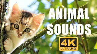 Animal sounds and songs 40min | Animals for Kids | Learn Animals | Animals in English