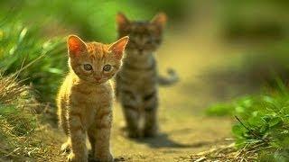 ❀ Kluci kočičí ❀ [HD]