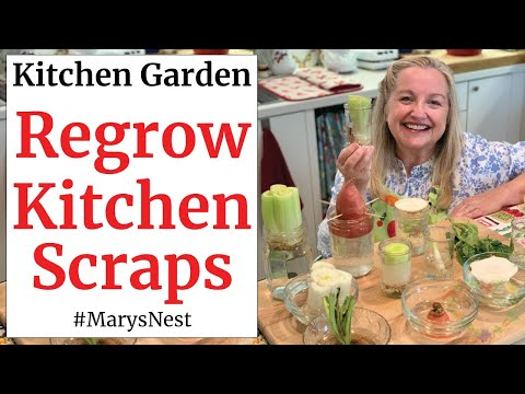 , title : '10 Vegetables You Can Regrow from Kitchen Scraps to Create a Recurring Harvest