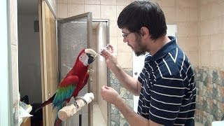 How to Teach a Parrot to Take Medication