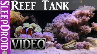 ►10 hours of Saltwater Reef Aquarium. HD Fish Tank. Aquarium Video For Cats. Aquarium HD Vdeo.