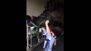 Horse Lifts Up Little Rider
