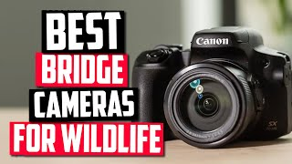 Best Bridge Camera For Wildlife Photography in 2020 [Top 5 Picks]