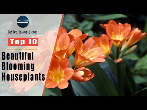 Top 10 Beautiful Blooming Houseplants