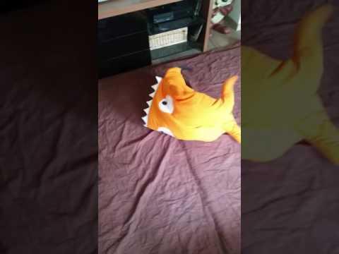 Haifisch kämpft mit Dackel...