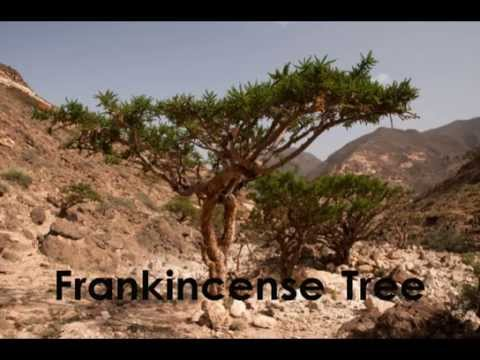 Video Why did people widely use frankincense in Biblical days when today we rarely use it for healing?